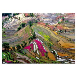 Puzzle Campos de arroz china 1000 Educa