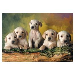 Puzzle Pequeños Labradores Educa